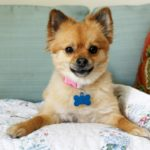 Caregiver in Northfield IL: Senior Pet Ownership