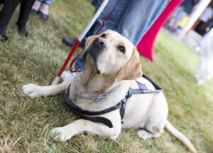 Elder Care in Glencoe IL: Benefits a Dog Brings